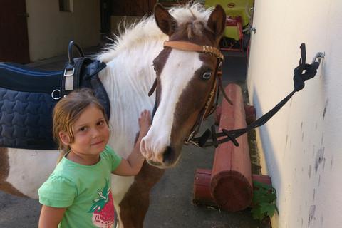 Pony striegeln
