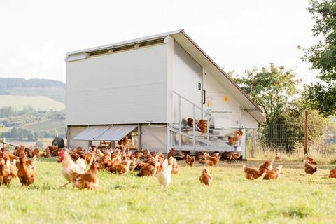 Das Hühnermobil