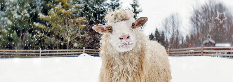 Urlaub auf dem Bauernhof im Winter