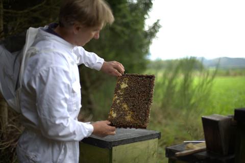 Honigexkursion