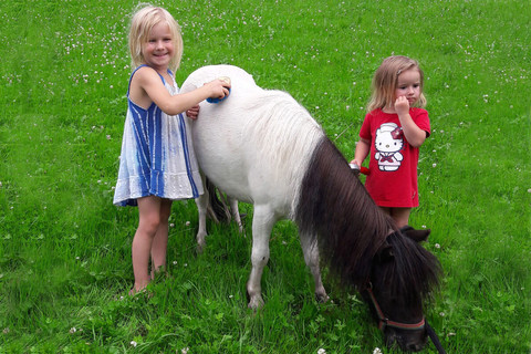 Pony putzen