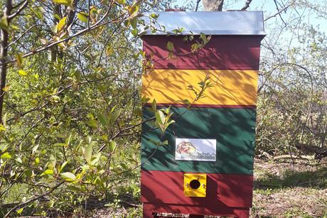 Unser Bienenstock bei Bienenretter24