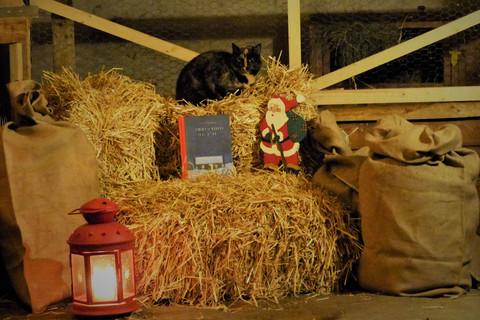 Ferienhof Harms - Weihnachten im Stall
