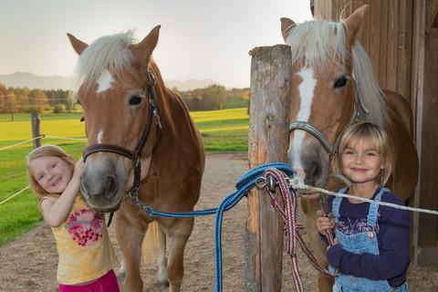 Unsere lieben Pferde