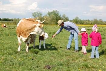 Zu Besuch auf der Weide bei Mutterkuh und Kalb.