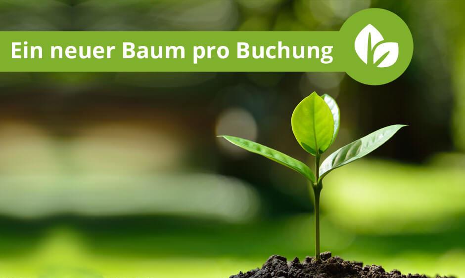 Ein neuer Baum für jede Online-Buchung