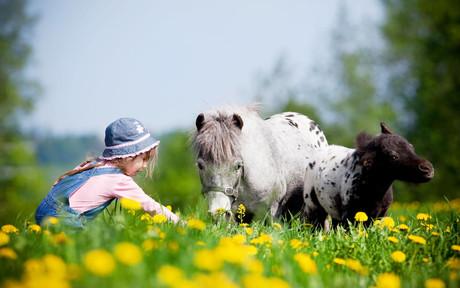 Reitmöglichkeit auf Bauernhöfen