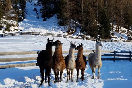 Winterurlaub inklusive Skipass - Alpin Appart