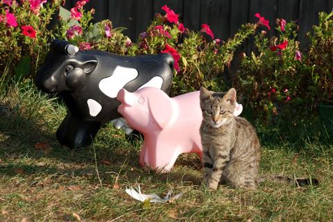 Katze auf dem Ferienbauernhof Moarhof