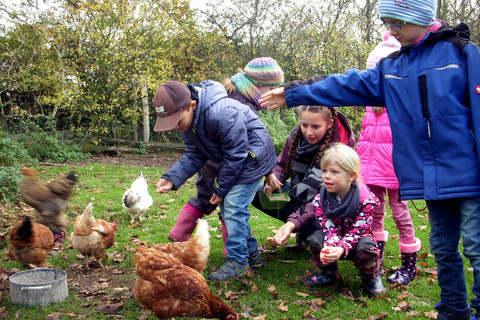 Bei den Hühnern