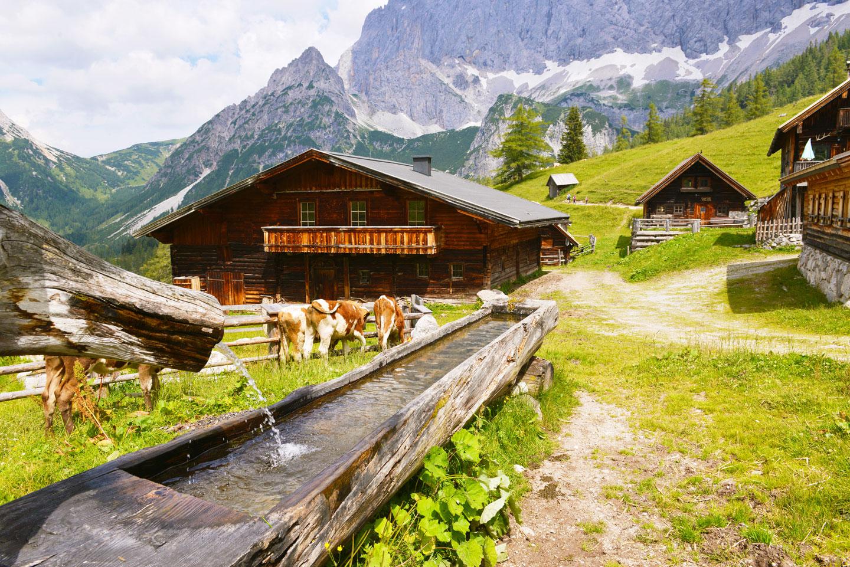 Neustattalm im Dachsteingebirge