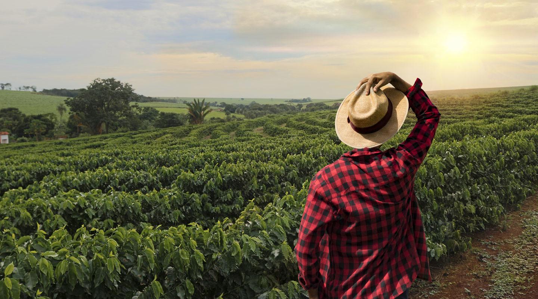 Farmer im Kaffeefeld