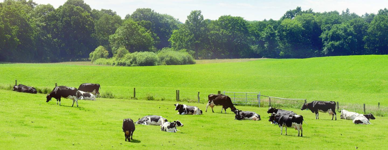 Hofarteninfo - Ferienhöfe mit Tierhaltung