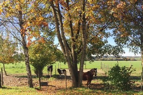 Wunderschöner Herbst im Chiemgau - Springerhof