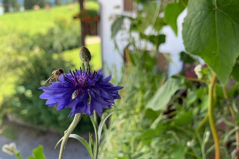 Nektarreiche Blüten