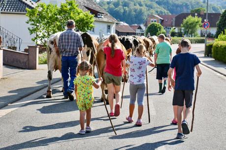 Groß und Klein treiben die Kühe heim