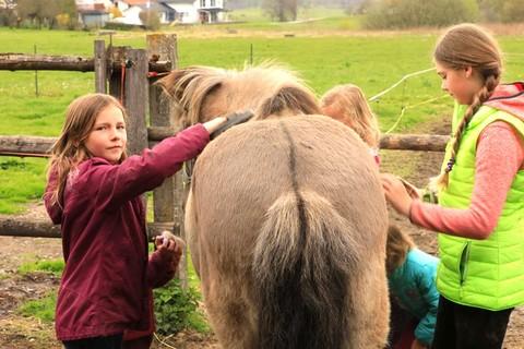 Ponyreiten und Ponys striegeln