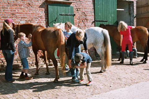 Ponys putzen
