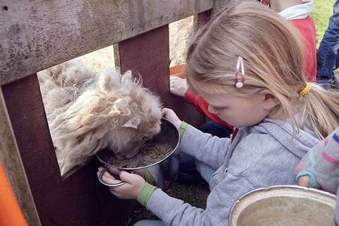 Mithilfe beim täglichen Füttern unserer Tiere