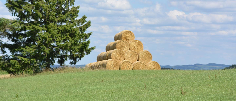 Landwirtschaft im Schiefergebirge