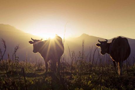 Kehrerhof - Erlebnisreicher Urlaub in den Südtiroler Bergen