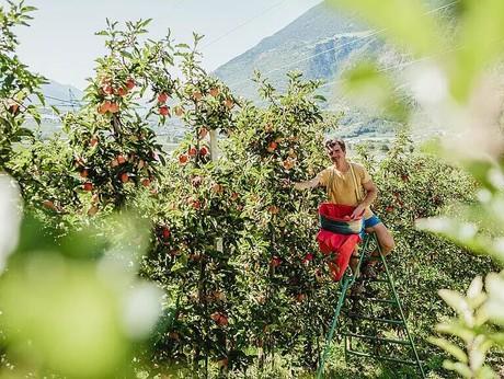Urlaub im Vinschgau - Pixnerhof