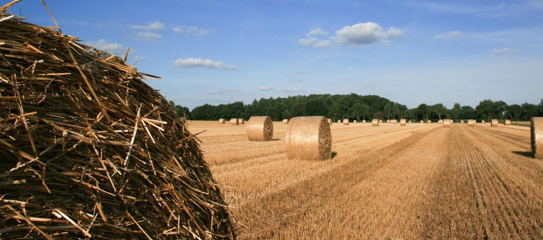 Landwirtschaft im Oldenburger Land