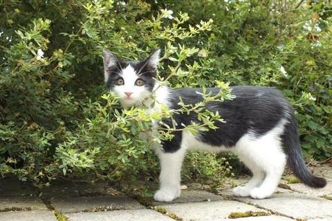 Unsere Katze Emma