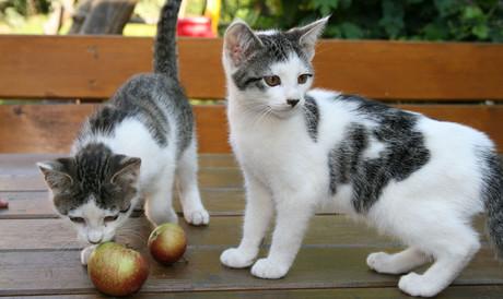 Zwei süße Kätzchen