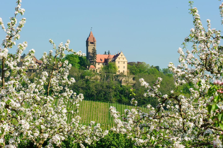 Schloss Stocksberg über Brackenheim-Stockheim