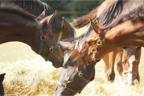 Pferde soweit das Auge reicht