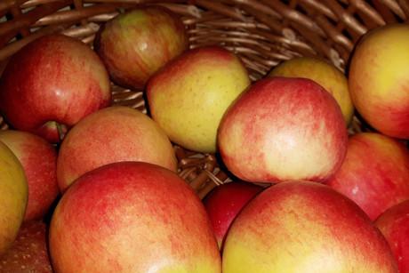 Apfelwochen genießen am Franzenhof