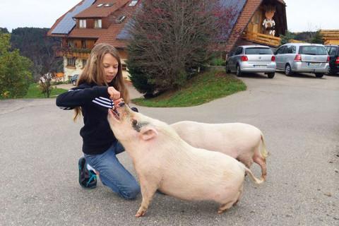 Schweine auf dem ERLEBNIS HOF Haberjockelshof