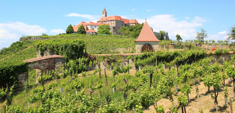 Weingarten vor dem berühmten Schloss Riegersburg