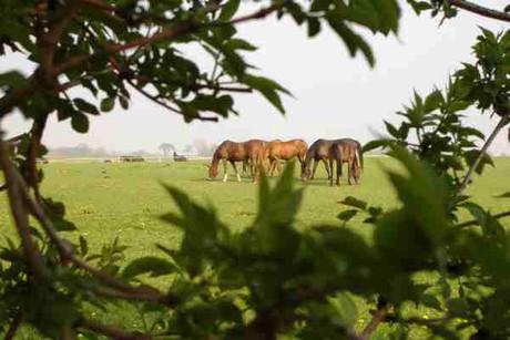 Pferde - Landgut Lischow