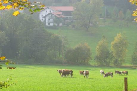 Ferienhof Anna und Alois Fürst - Herbsttage im Bayerischen Wald