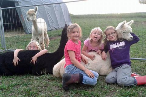 Kuscheln mit unseren Alpakas