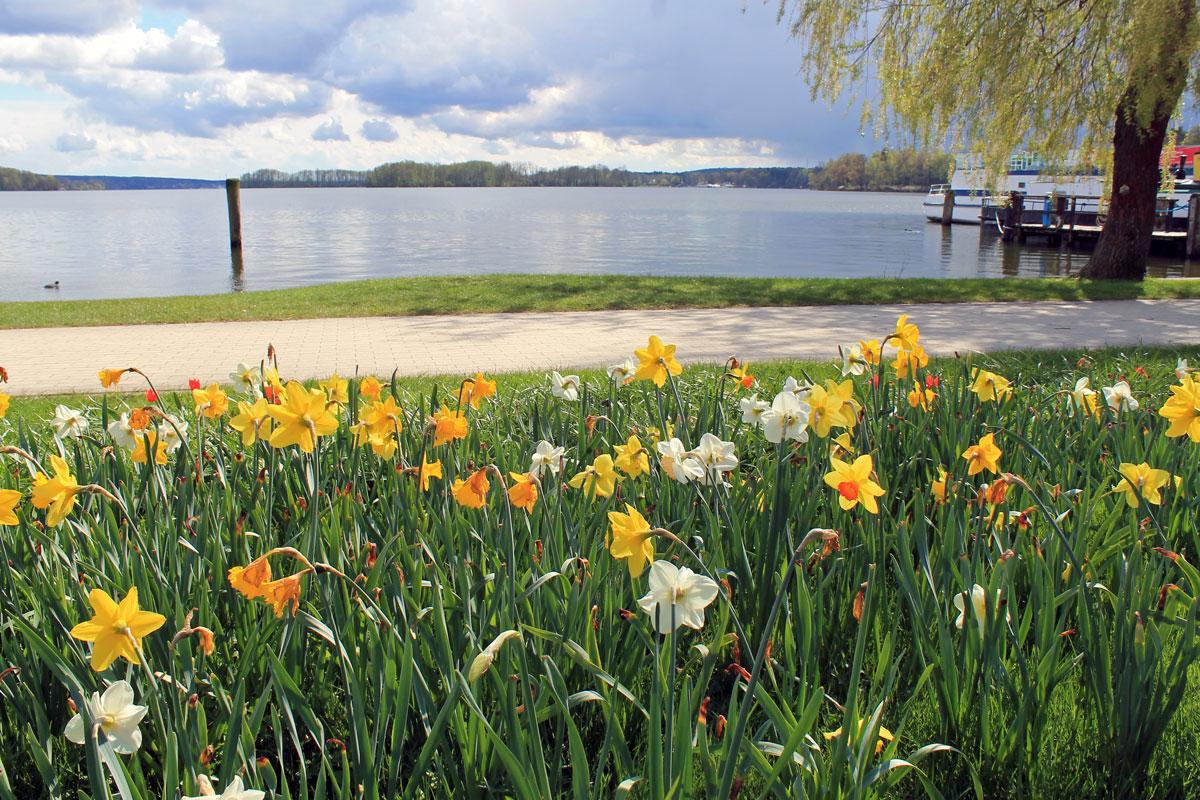 Frühlingswiese am Scharmützelsee im Östlichen Brandenburg