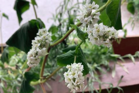 Blühsamentütchen - Die ersten Blüten