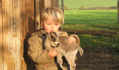 Mit Ziegen kuscheln beim Hofbauer