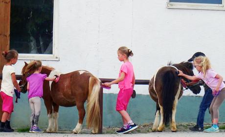Süße Ponys striegeln und putzen