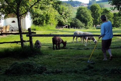 Im Garten bei den Schafen und Ziegen