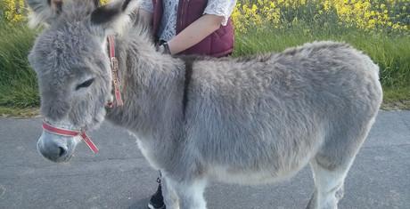 Flauschiger Esel