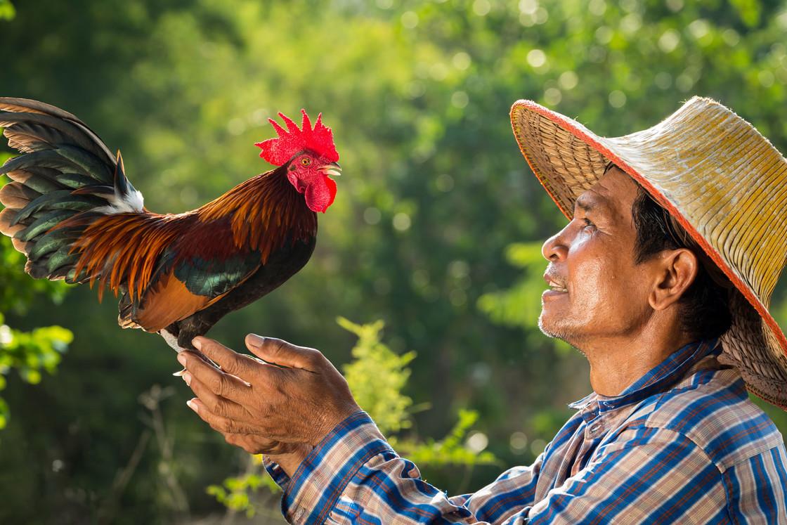Farmer mit Hahn