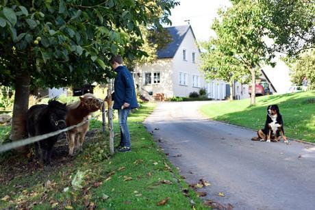 Angebot-3-Wohnung Zum Alkenbruch - Goldener Herbst in der Eifel-Ferienhof-Pütz