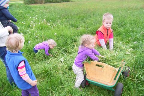 Gras holen für die Tiere