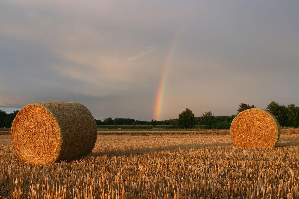 Regenbogen im Feld in der Schwäbischen Alb