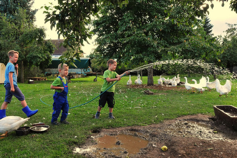 Fleißige Helfer auf dem Ferienbauernhof Moarhof