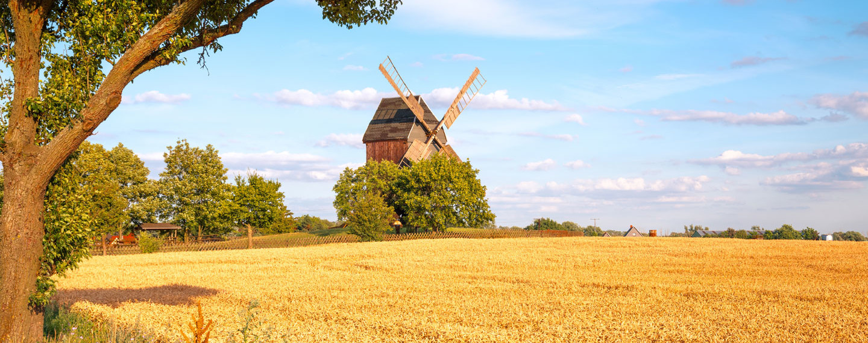 Windmühle auf Feld in Altmark