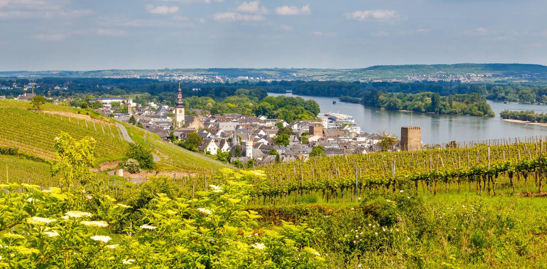 Rüdesheim am Rhein zwischen den Weinbergen - Hessen/Taunus/Rheingau